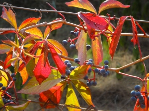Vibrant reds and autumn berries on the hillsides surrounding Soller