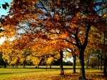 Autumnal hues in Clapham Common