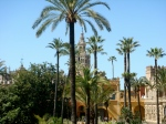 Typical cityscape with Giralda and plams