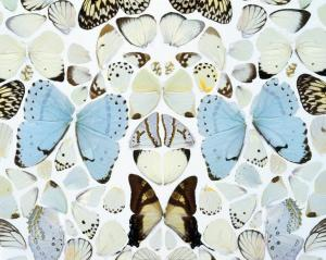 Damien Hirst, Sympathy in White Major - Absolution II (2006)