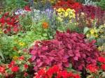 Multi-coloured flowers brighten up London's parks
