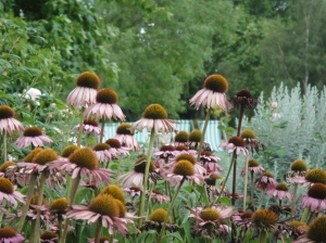 Daisies in Regent's Park (I love the lone black one on the right)