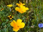 """The park's beautiful """"wild"""" flowers"""