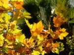 Glorious autumn hues