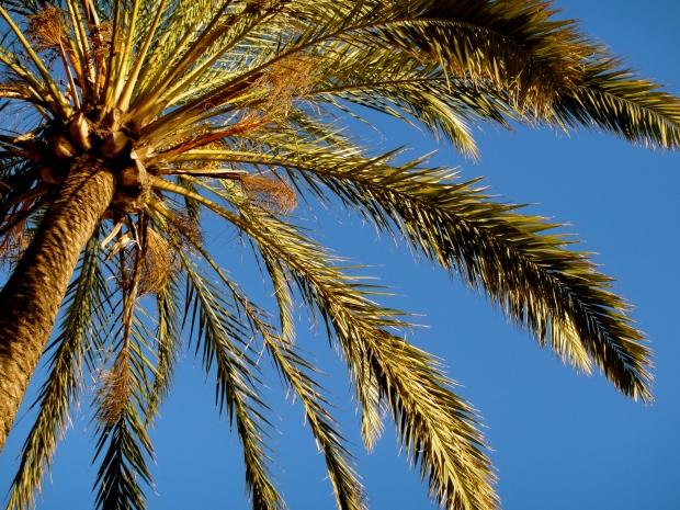 My adored Marbella