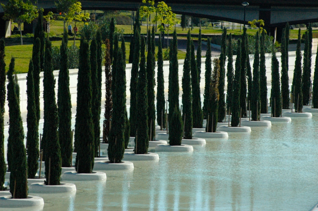 Cypress trees appear to float on water