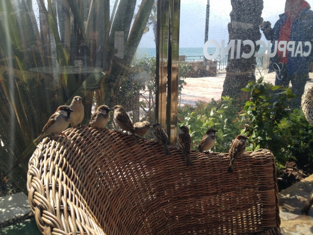 Some birds drop in on lunch at Cappuccino Grand Cafe
