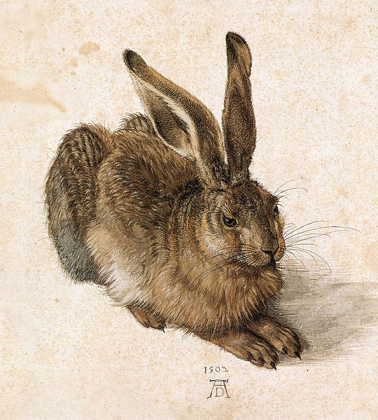 A Young Hare (1502)