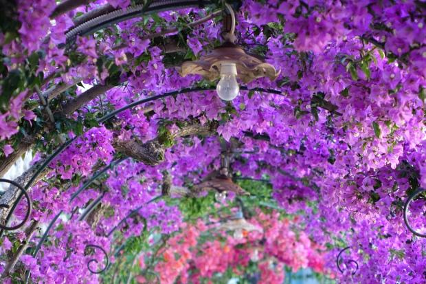 Floral walkway, Positano