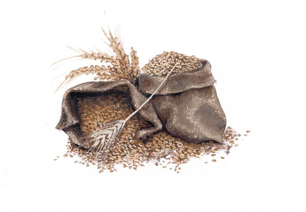 Grain (2015 © Nicholas de Lacy-Brown, gouache on paper)