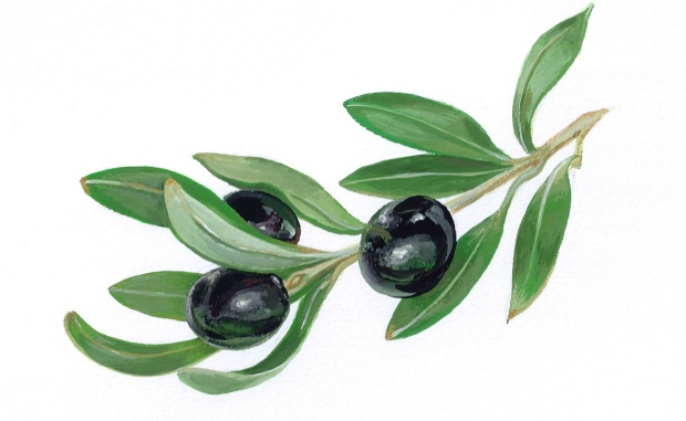 Black olives (2015 © Nicholas de Lacy-Brown, gouache on paper)