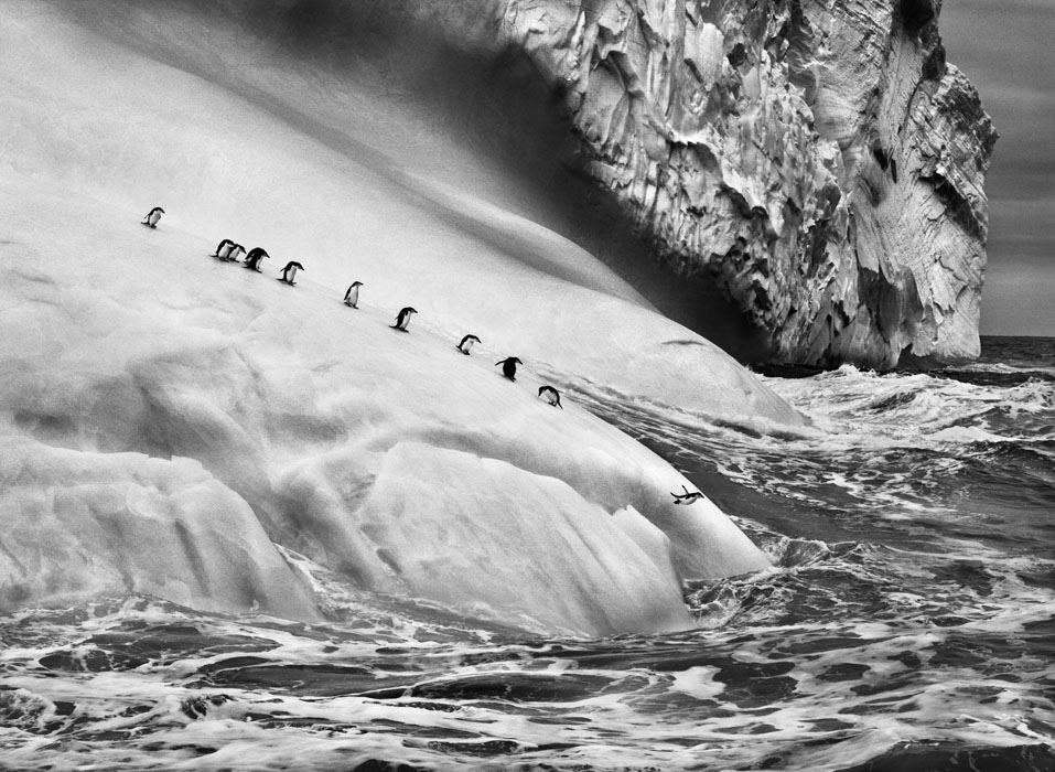 Chinstrap+penguins+on+an+iceberg,+between+Zavodovski+and+Visokoi+islands.+South+Sandwich+Islands,+2009