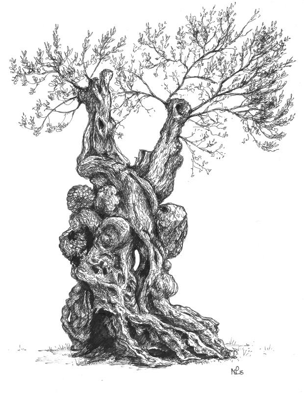 Orient Olive Tree (2015 © Nicholas de Lacy-Brown, pen on paper)