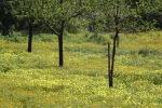 Mallorca's Spring