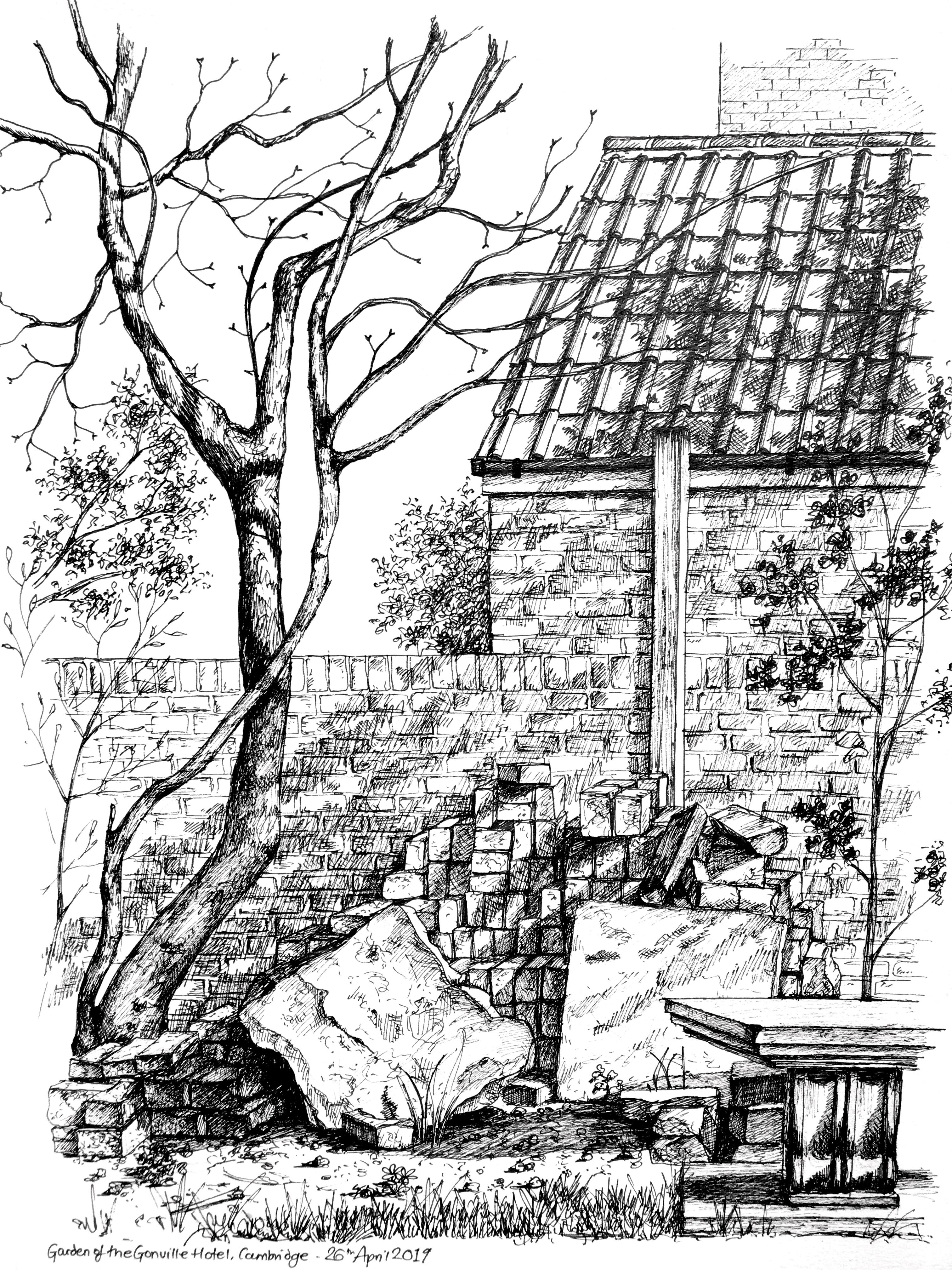 Gonville Garden sketch